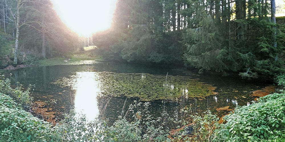 Botanical garden university of basel for Fish eggs in pond