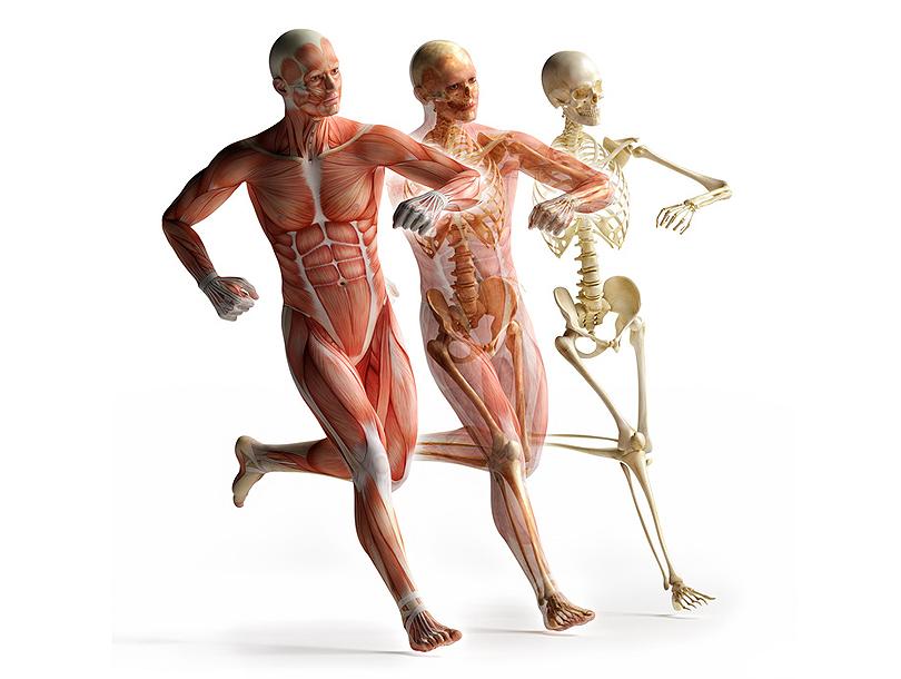 Wer rastet, der rostet» – Ausstellung im Anatomischen Museum ...