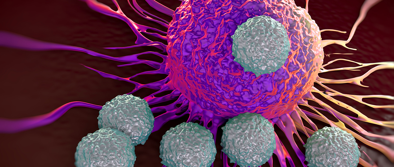 T cells attack a tumor cell