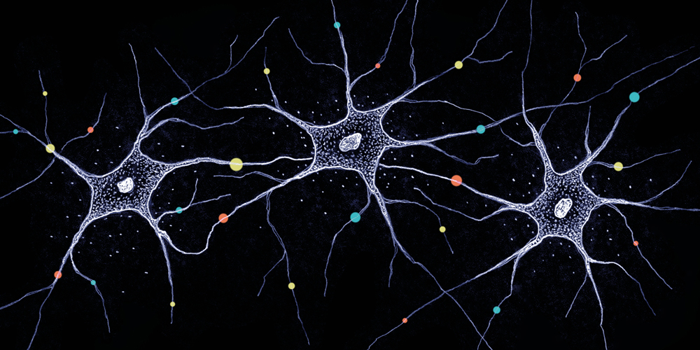 Diversity in the brain – How millions of neurons become unique