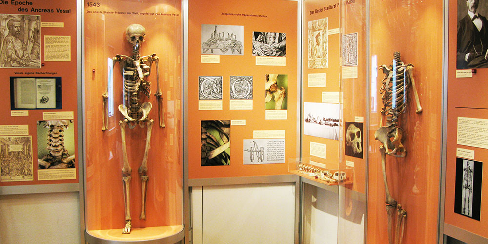 Image result for basel anatomisches museum images