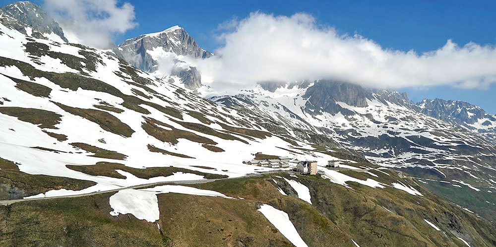 "Alpine plants are losing their white ""protective coat"""
