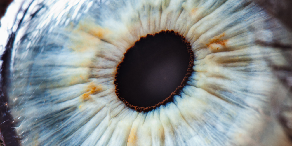 Macular degeneration: no cure in sight.