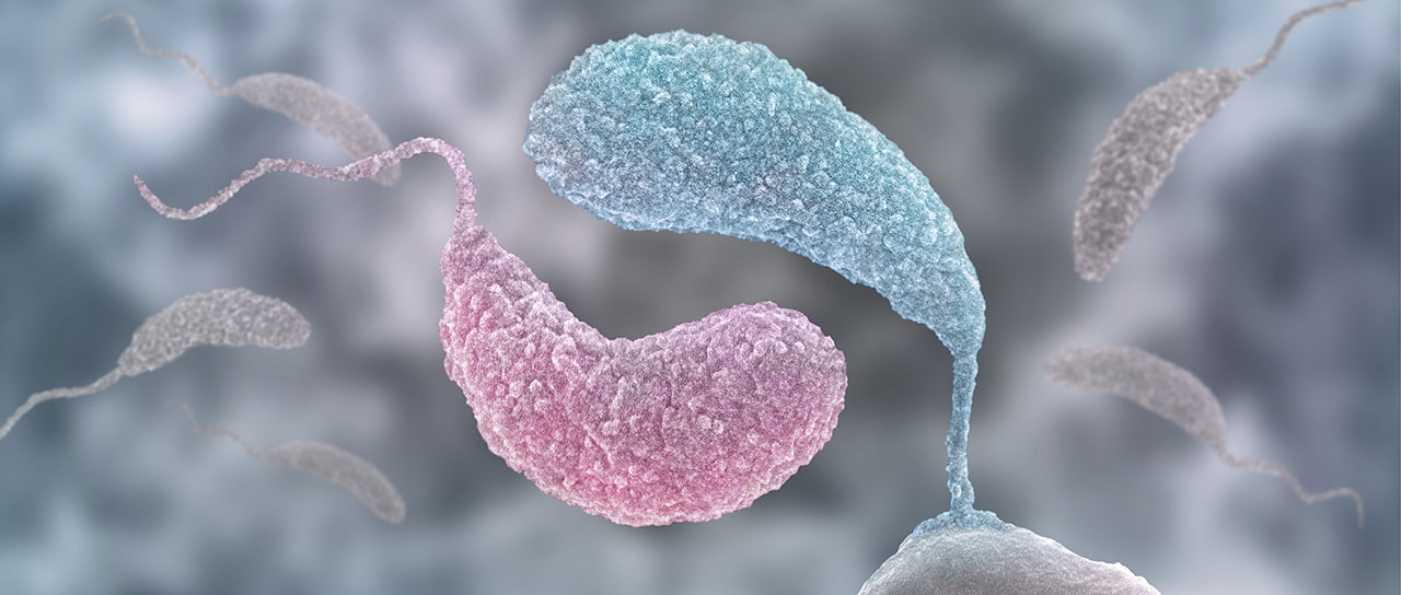 Caulobacter bacteria in sessile and mobile lifestyle, forming the yin & yang symbol