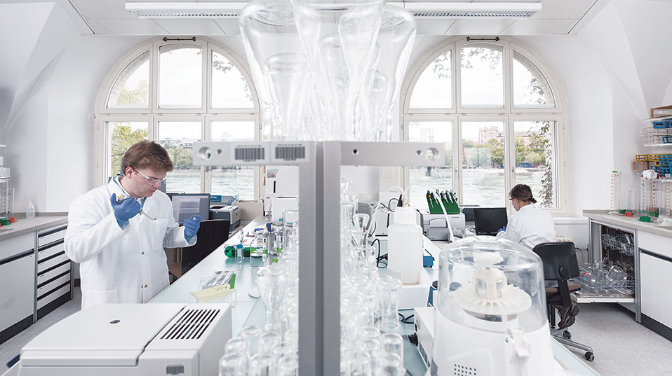 Lab analysis: Genetic analysis of the collected material is carried out in the lab on St.Johanns-Vorstadt in Basel, with a view to identifying differences between subterranean floral diversity where the neophyte is present and where it is not. (Image: University of Basel, Christian Flierl)