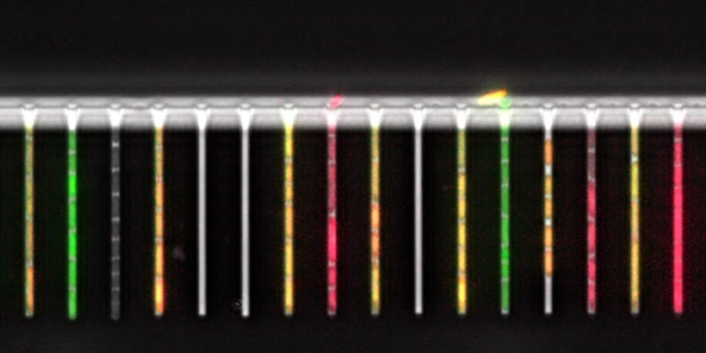 Lab-on-a-chip for tracking single bacterial cells