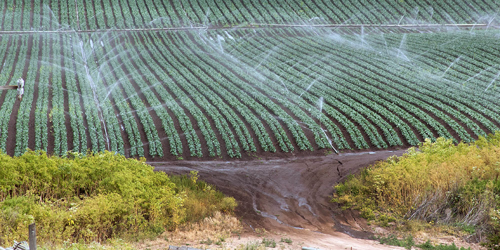 Erosion by water: Sprinkler irrigation creates runoff and erosion of the soil (in the foreground); seasonal rainfall increases the effect. (Photo: Lance Cheung, US Department of Agriculture | Public domain)
