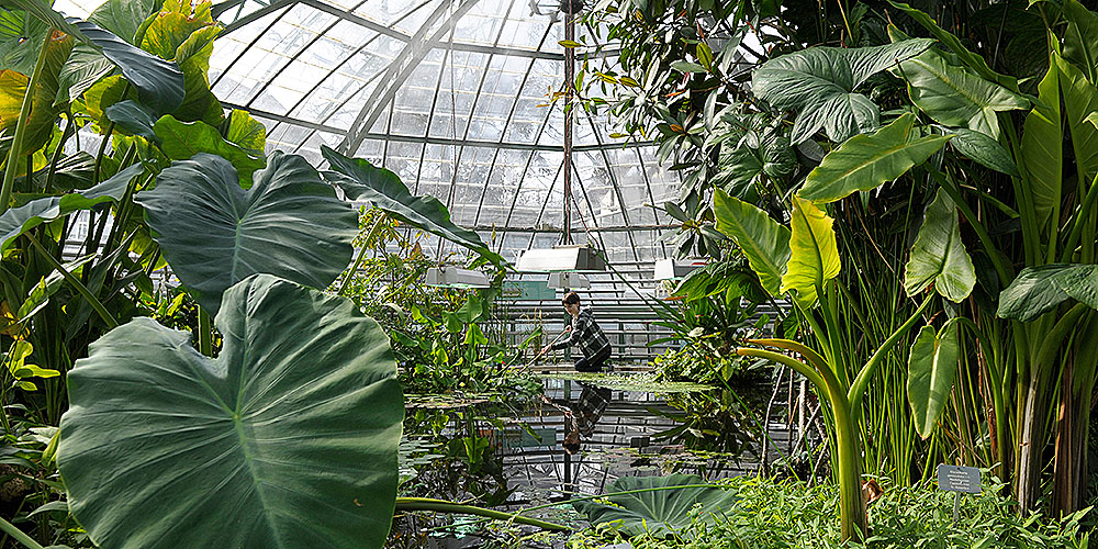 Botanical garden university of basel for Botanic com jardin