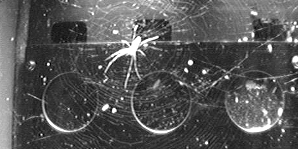 A black and white picture of a spider in its web in the experimental container on board the ISS